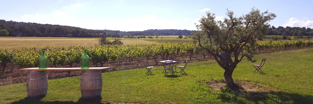 vue extérieur domaine fredavelle barriques chaises olivier vignes soleil provence vin aop coteaux d'aix-en-provence