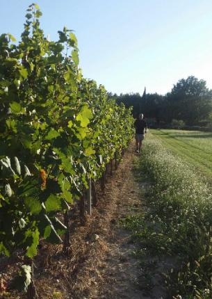 vignes domaine fredavelle vigneron rang avant vendanges