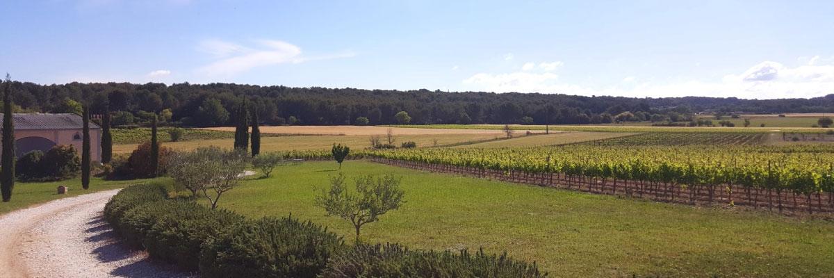 vue arrivee au domaine fredavelle vignoble paysage provençal lavandes oliviers vignes vin eguilles campagne aixoise