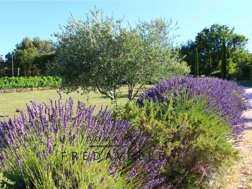 domaine fredavelle paysage provence vegetation ete visite tourisme lavande olivier vue sur les vignes aop aix-en-provence eguilles route de pelissanne vignoble