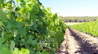 adresse domaine fredavelle visite balade dans les vignes initiation oenologie dégustation accueil groupe événementiel aix-en-provence marseille